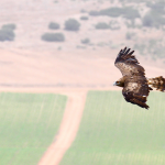 Estudio y conservación de fauna protegida